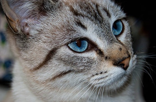 chat ojos azules