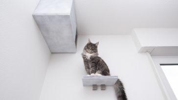 chat hauteur