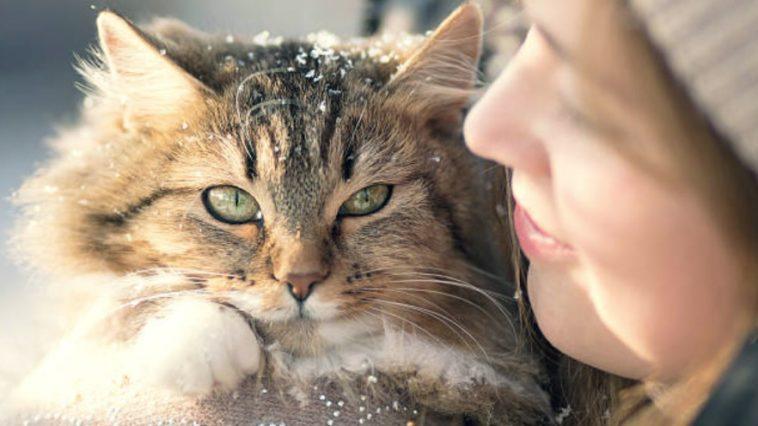 chat câlin hiver neige