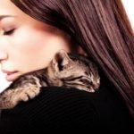 chaton câlin