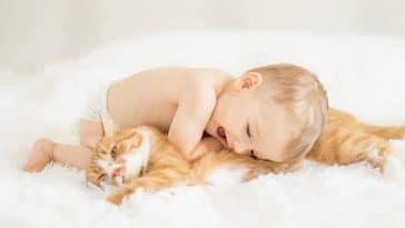 chat bébé câlin enfant
