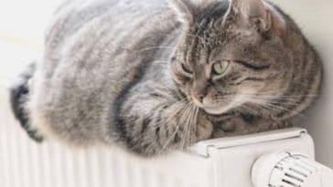 chat froid couché radiateur