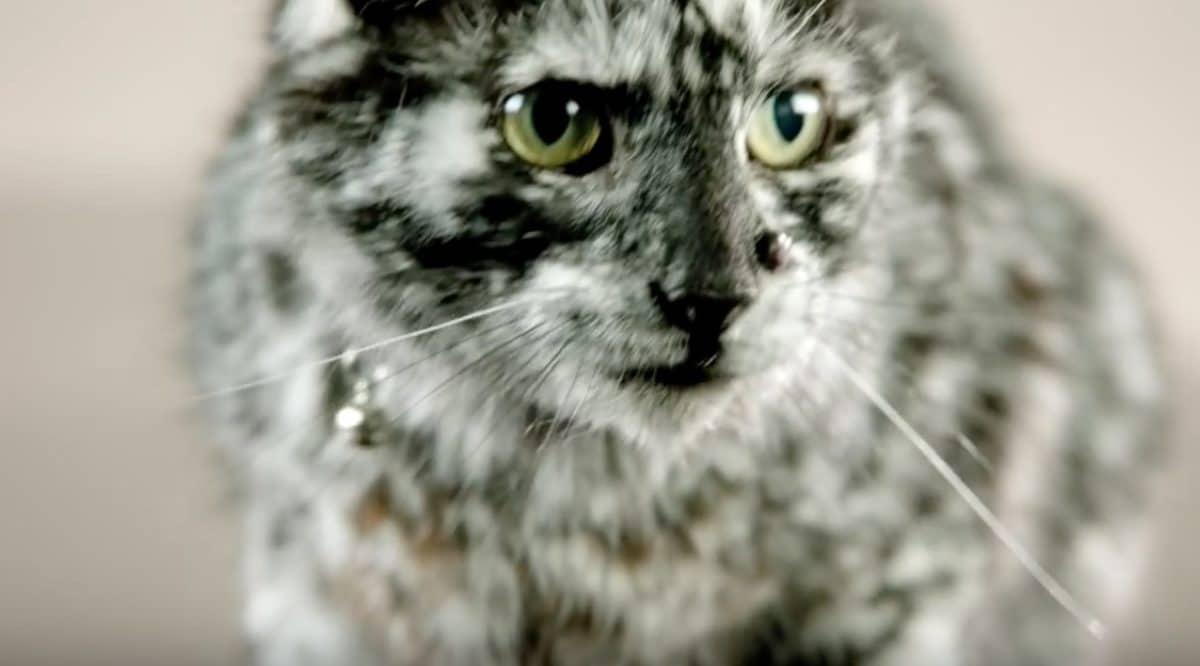 chat vitiligo scrappy