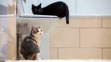 chats salle de bains toilettes