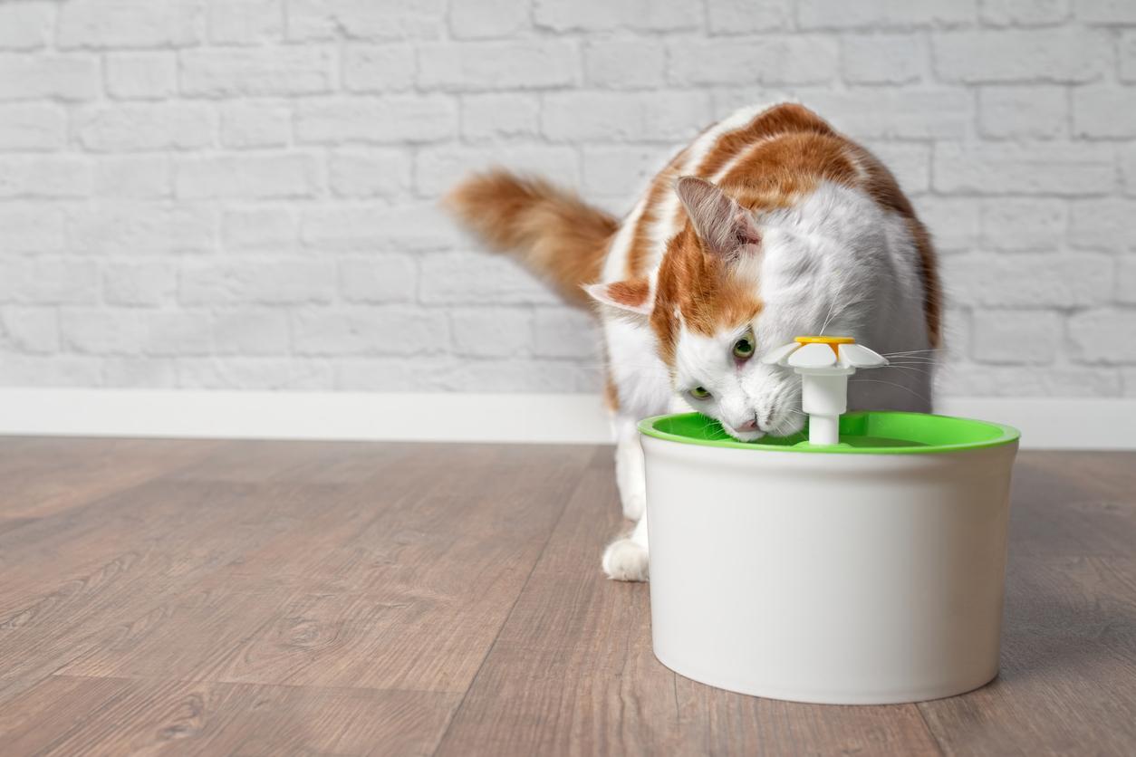 chat boit fontaine à eau