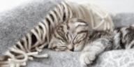 chaton dort
