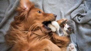 chien chat bagarre