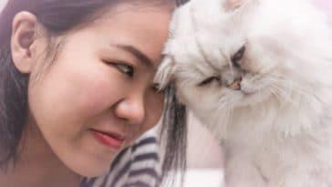 chat cogne tête