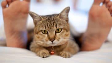 chat couché lit