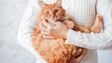 chat bras