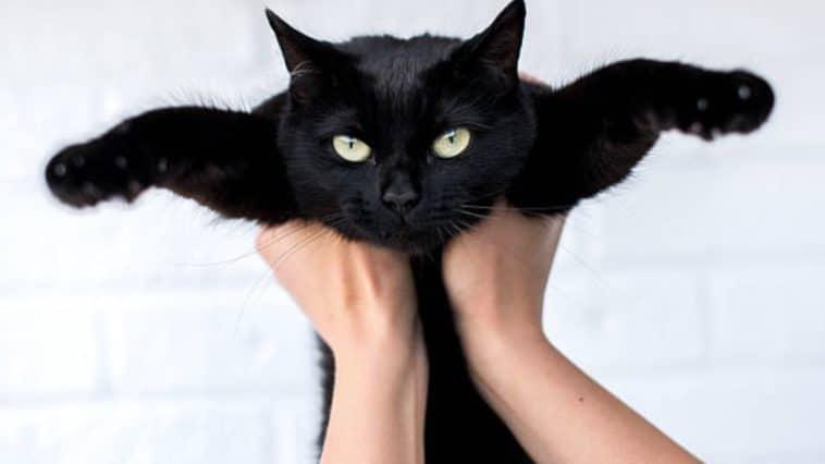 chat tenu bras
