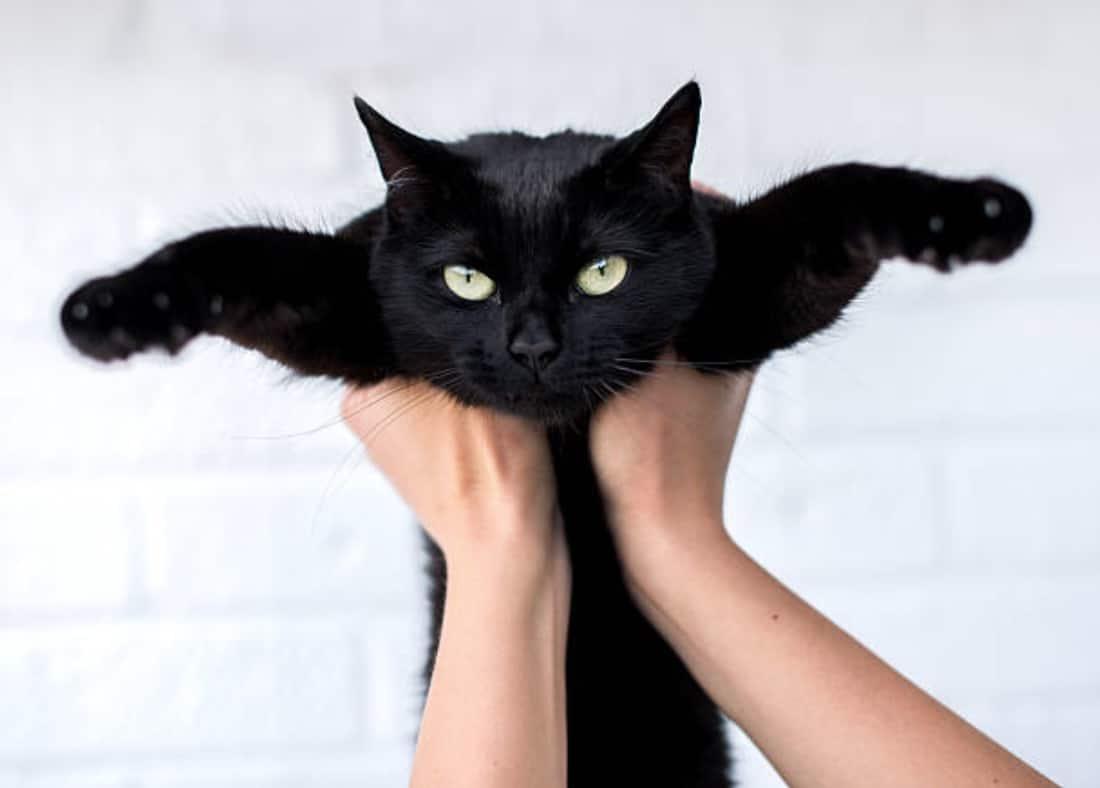 Mon Chat Dort Sur Mes Pieds quelle est la bonne façon de tenir un chat dans les bras ?
