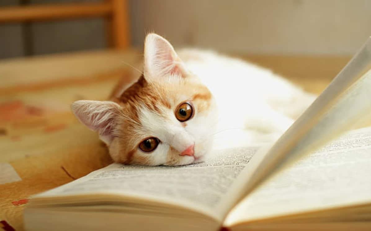 chat couché livre