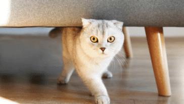 chat marche