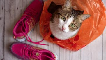 chat sac en plastique