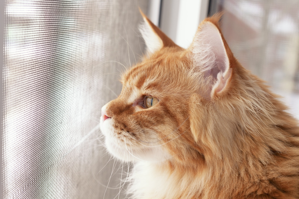 chat moustiquaire