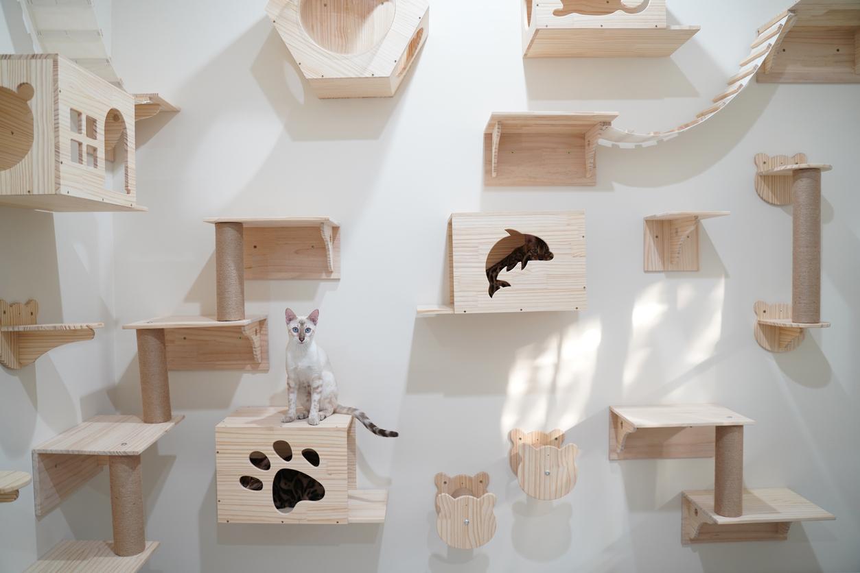 chat étagères murales