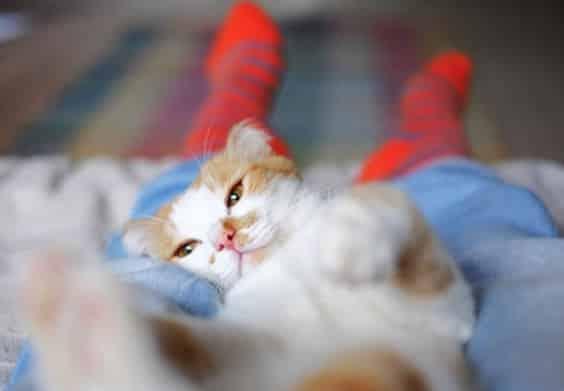 chat couché pieds lit