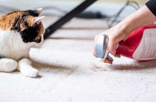 chat produit nettoyant