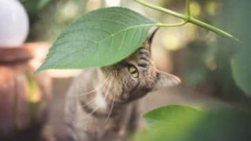 chat sent plante