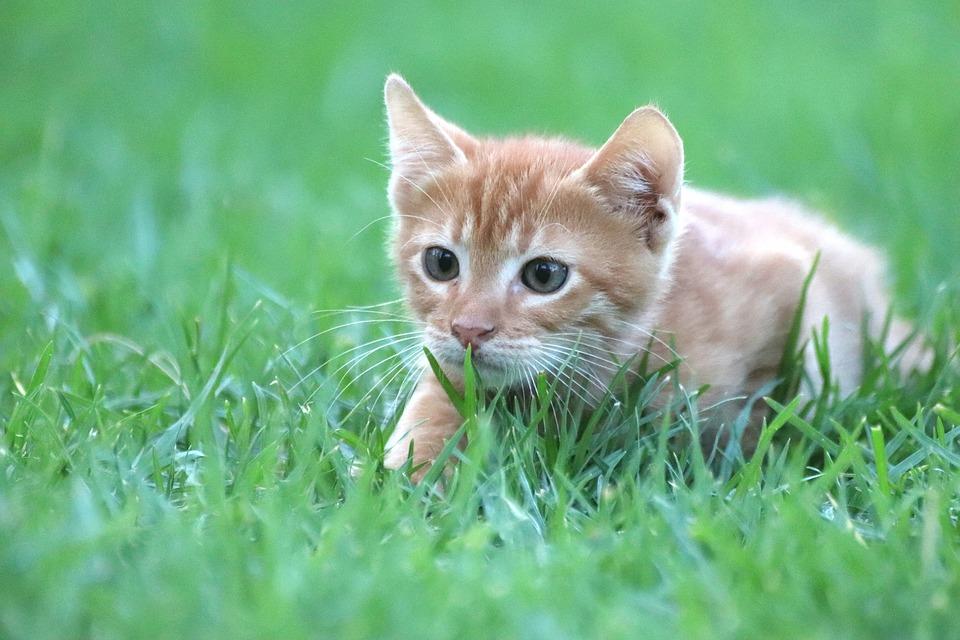 chat territoire