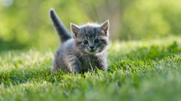 chaton été