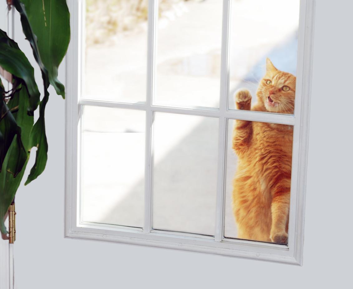 chat gratte fenêtre