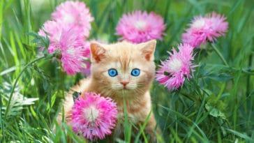 chat jardin