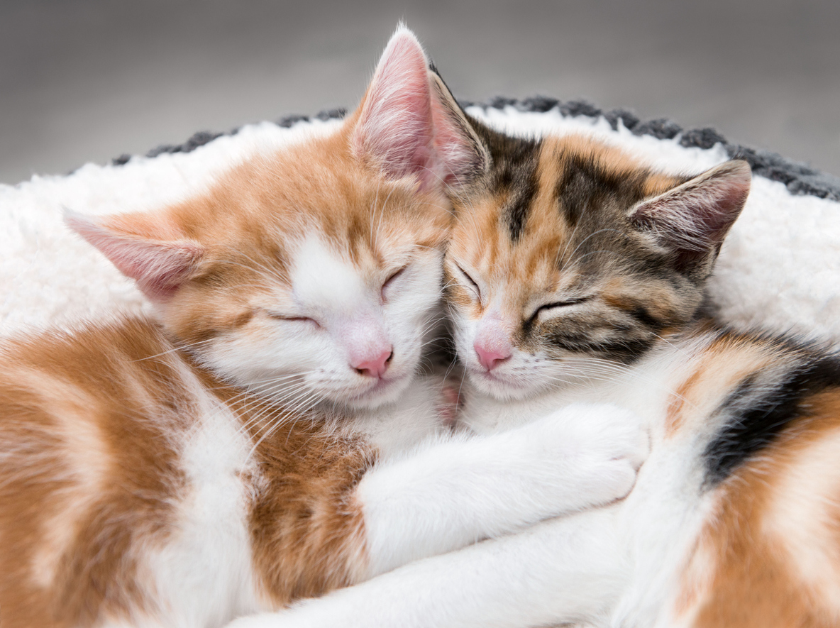 chats qui s'aiment