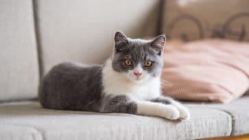 chat maison