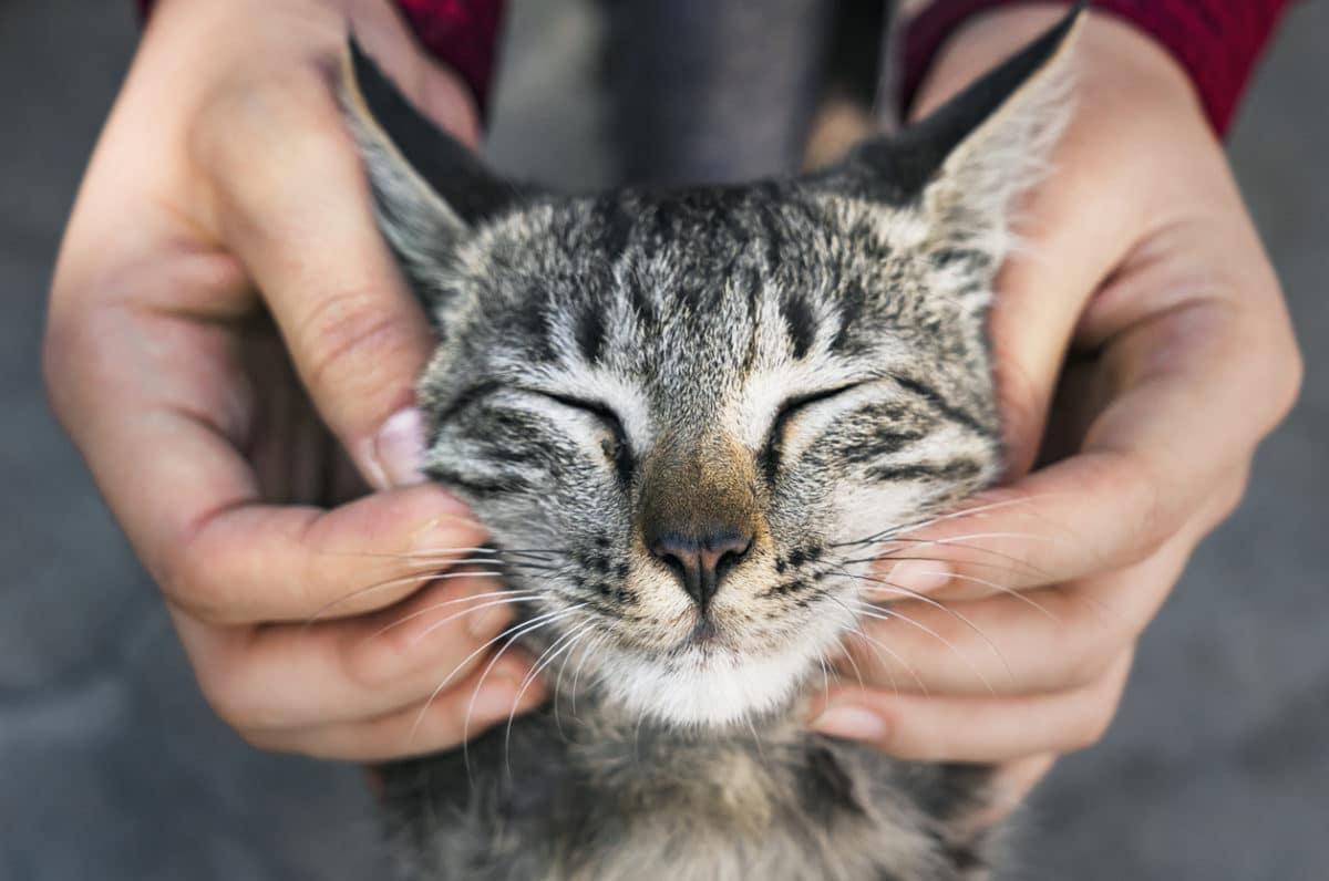 chat câlin