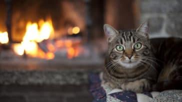 chat brûlure