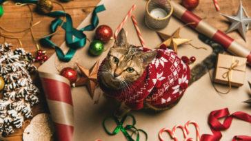 cadeaux chat Noël