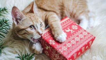 chat mange papiers cadeaux