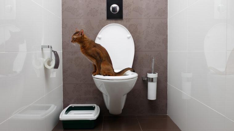 chat toilettes