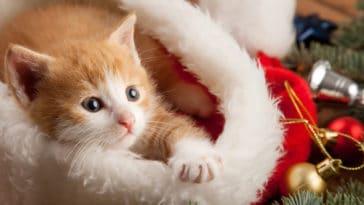 offrir un chat pour noël