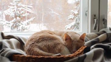 chat hiberne