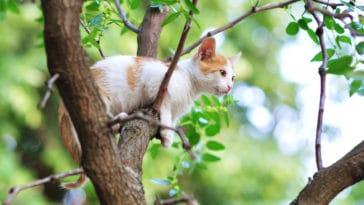 chat coincé arbre