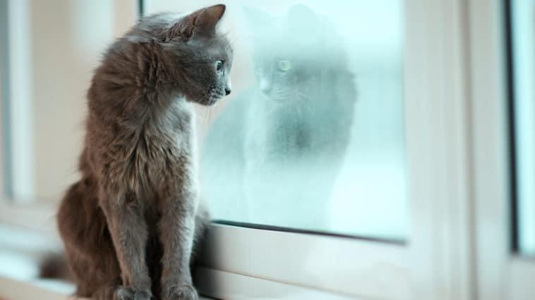 chat seul