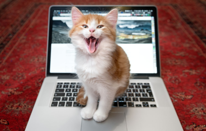 chat assis ordinateur