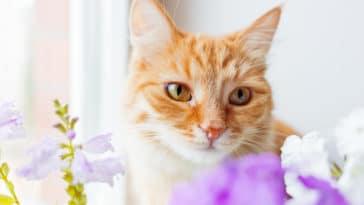 chat huiles essentielles