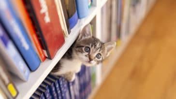 chaton librairie