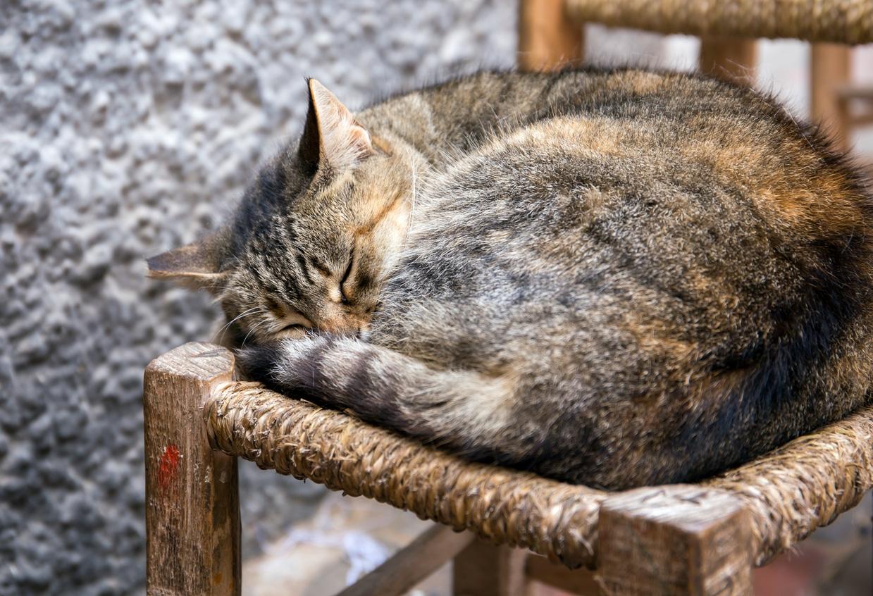 chat dort recroquevillé