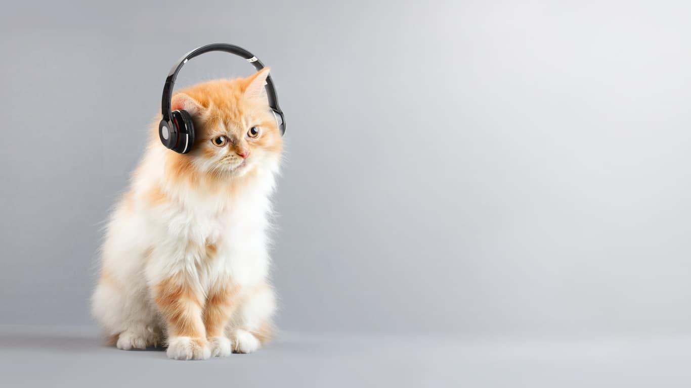 chat musique