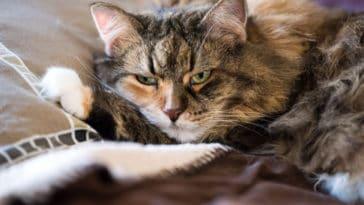 chat de mauvaise humeur