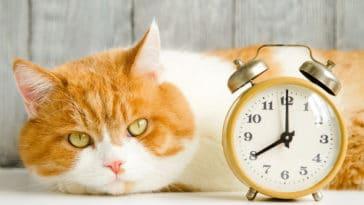 chat changement d'heure