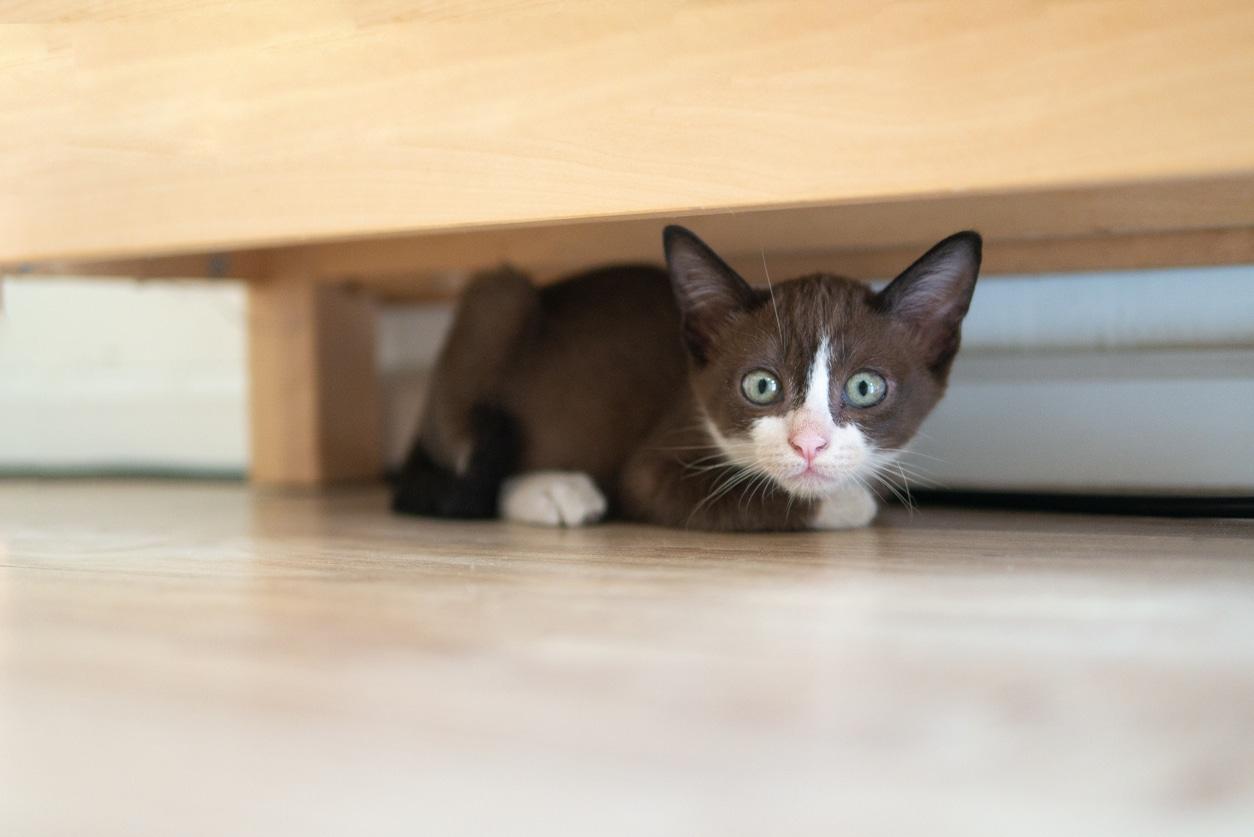chaton caché