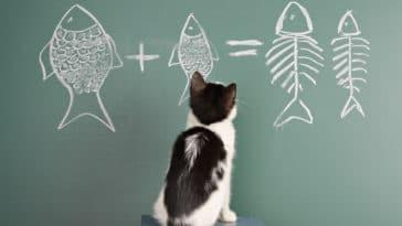 chat jeu de réflexion