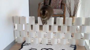 cat challenge
