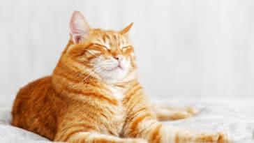 chat cligne des yeux